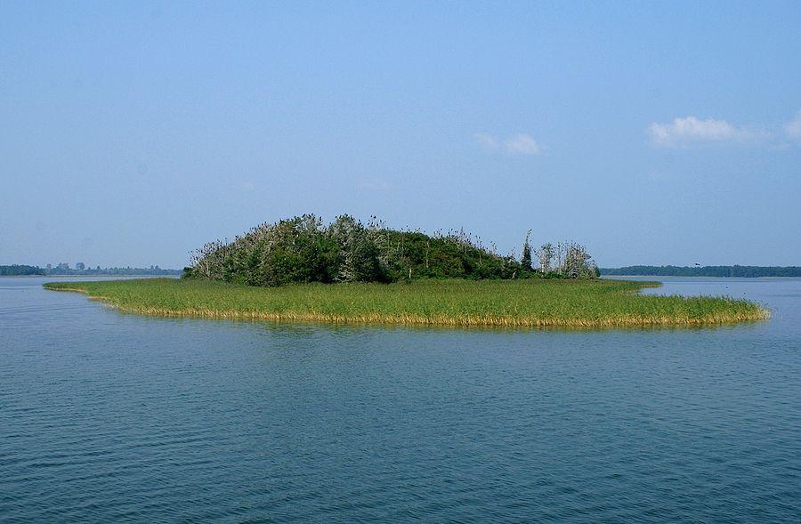 Wyspa kormoranów na Jeziorze Dobskim